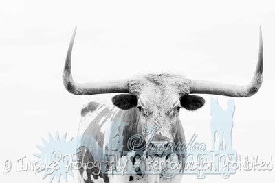Lonnie Ranch web-1939