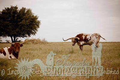 Lonnie Ranch web-1881