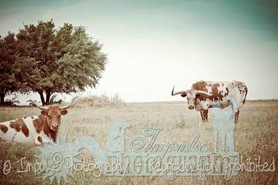 Lonnie Ranch web-1885