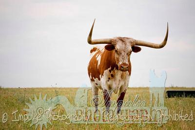 Lonnie Ranch web-1976