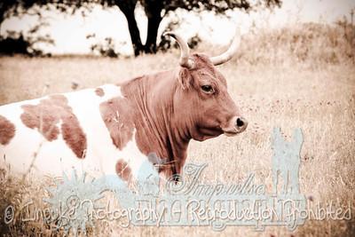Lonnie Ranch web-1906