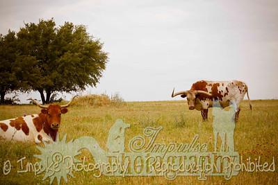 Lonnie Ranch web-1884