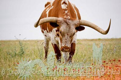 Lonnie Ranch web-1925