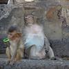 Monkeys at Wat Phra Prang Sam Yot