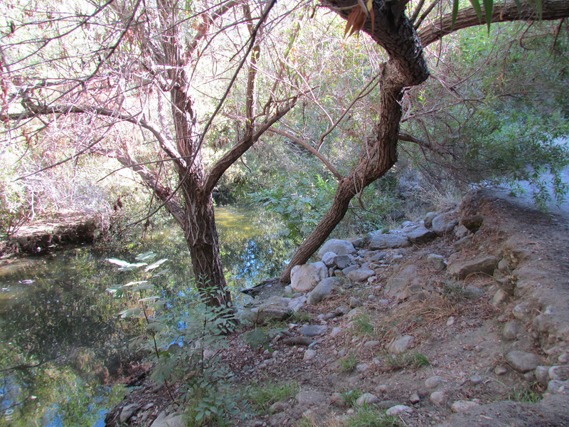 Here's another view of the riparian area.