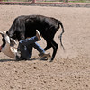 Learning to Love Your Steer