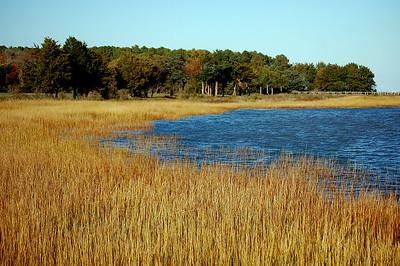 Grassy Coast