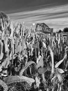 """Railway Cactus"" - Carlsbad, New Mexico"