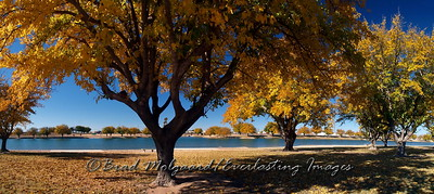 """Fall Shade Canopy"" / Pecos River Lower Dam - Carlsbad, NM"