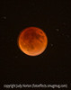 Full Moon/Blood Moon at Complete Lunar Eclipse, September 28, 2015