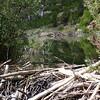 beaver dam, beaver lodge, lower cascades