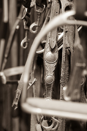 Riders, Lessons, Horses and Tack