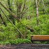 Bench in the Woods<br /> A bench overlooking the trees on the Meadowdale Beach Park Trail