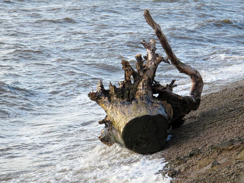 IMG_2899 High tide, Granny's Bay, 17 Oct 2012 SM