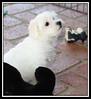 Marley's puppy...