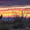 Saguaro National Park - West<br /> Sonoran Desert<br /> McCain Loop Sunset<br /> Tucson, Arizona