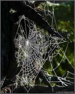 """SPIDER WEB"",Wrangell,Alaska,USA."