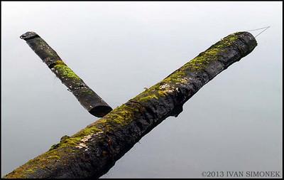 """""""Y"""",floating logs,Wrangell,Alaska,USA."""