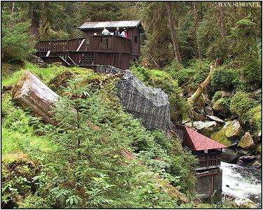"""ANAN BEAR OBSERVATORY"", Alaska, USA."