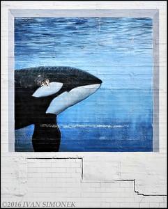 """""""ORCA   MURAL""""."""