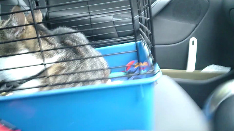 Trip to the vet