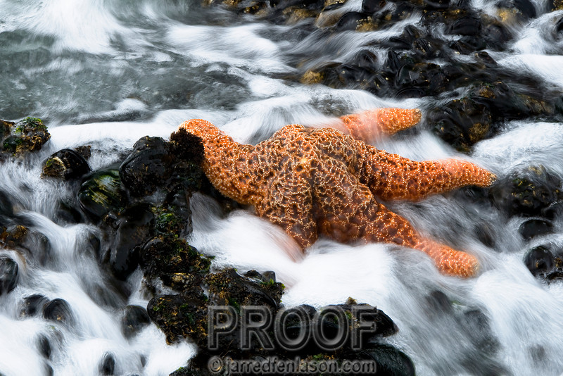 Sea Star in the Waves