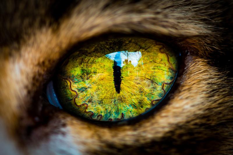 Cat eye close-up