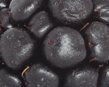 Close-up of a blackberry