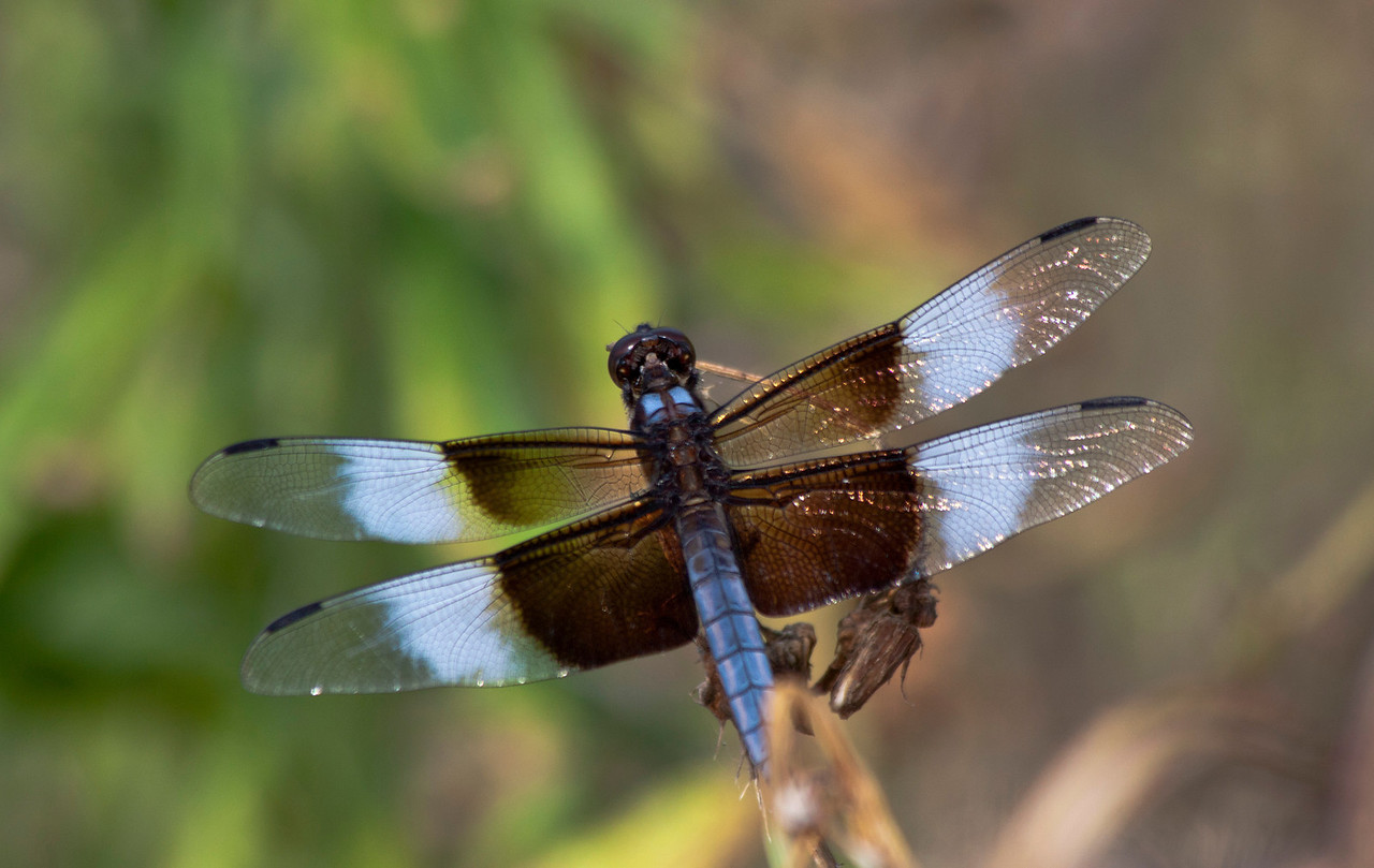 dragonfly_IMG_8834_6508