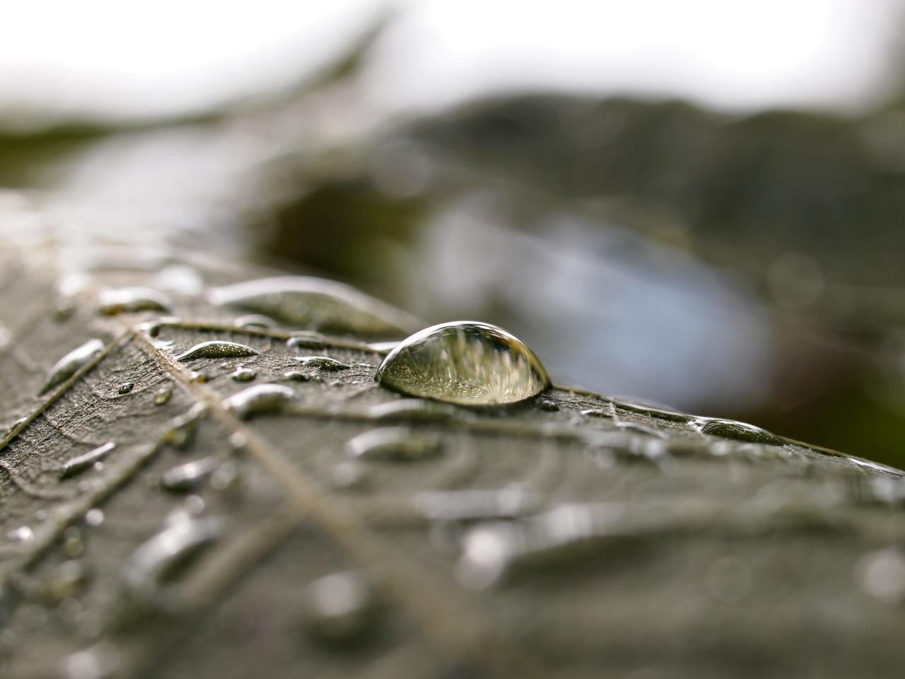 Macro Raindrop on Leaf  Order Code: A7