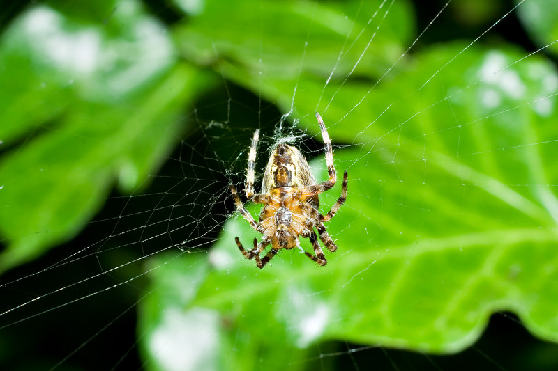 A close encounter with a spider