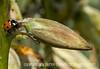 Ladybug on Yucca