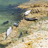 Seals caught sunbathing near Big Sur California