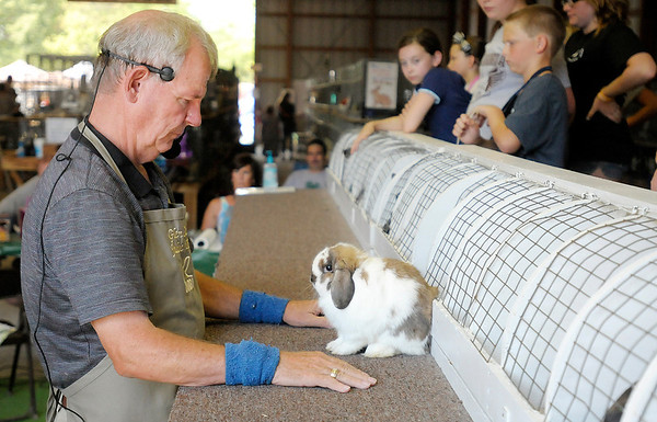 "Judge Glen Carr looks at Campbell Cross' Holland Lop as he chooses the ""Best 4 Class Rabbit."" Cross' Holland Lop went on to win best 4 Class and Best in Show."
