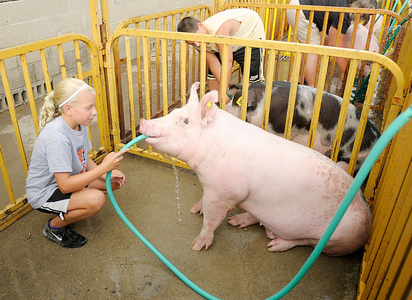 Megan Green, 11, gives her hog Patches a drink while washing him during the 4-H Fair on Tuesday. Washing hogs is part of the daily routine of caring for the animals.