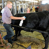 Todd Hieatt, 12, sprays the coat of his calf before competing in Intermediate Showmanship during the 4-H Fair on Tuesday.