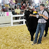 Blake Morehead, 13, competes for Intermediate Showmanship. Morehead won the Champion ribbon.