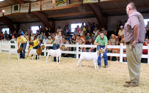 Contestants position their animals and keep an eye on the judge.