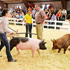 Judge Craig Pearson questions Stephanie Morris during the swine portion of the competition.