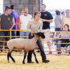 Hannah Alcala maneuvers her sheep.