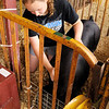 Cheyenne Morgan, 15, cares for her reserve champion Berkshire Barrow during the 4-H Fair on Thursday.