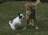 This is me and my bestest friend Buddy.  He loves to play with me!
