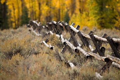 USA - Yellowstone Nat'l Park
