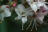 Visitor roams buckeye flower.