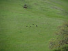 First sighting of wild turkey family, on east facing slope above main fire road.