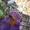 Busy Buzzing before the Snow.<br /> <br /> Photographer's Name: Brian Fox<br /> Photographer's City and State: Anderson, IN