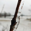 Nature's Swizzle Stick ,,,,,,(frozen rain can have beauty)<br /> <br /> Photographer's Name: J. R.  Rosencrans<br /> Photographer's City and State: Alexandria, IN