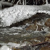 """Spring thaw"" Killbuck Creek<br /> <br /> Photographer's Name: J. R.  Rosencrans<br /> Photographer's City and State: Alexandria, IN"
