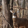 Photo taken at Eagle Creek Park...Ten Point Buck<br /> <br /> Photographer's Name: Jim Campbell<br /> Photographer's City and State: Anderson, IN
