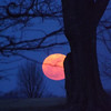 The last full moon of winter, taken at my farm in Richland Township.<br /> <br /> Photographer's Name: J.R.  Rosencrans<br /> Photographer's City and State: Alexandria, Ind.